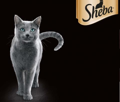 #GRAZIEGATTO | Sheba